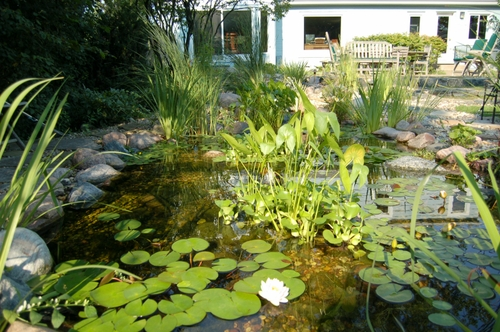 Pond and House